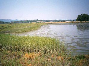sonoma-baylands-wetland-demonstration-01