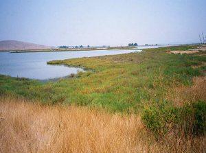 sonoma-baylands-wetland-demonstration-02