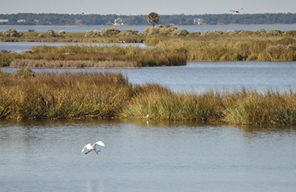 Healthy coastal wetlands can dramatically reduce property damages from catastrophic storms and hurricanes. Credit: Tom Blagden